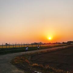 お家で過ごそう/コロナに負けるな/がんばれ日本/小手鞠 藤 四葉のクローバー/アゲハ/サイクリング/... 麦畑と子供と夕陽   パパのお迎えに行く…