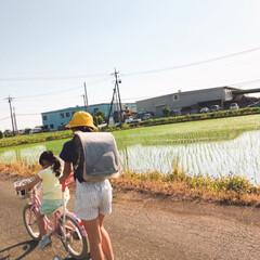 お人形遊び/補助輪自転車/田植え後の田んぼ/令和元年フォト投稿キャンペーン/ハンドメイド/節約/... おはようございます😃  天気が良いですね…