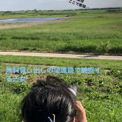 新しい生活様式/コロナに負けるな/がんばれ日本/渡良瀬遊水池/雛鳥誕生/コウノトリ 渡良瀬遊水池に飛来して住み着いたコウノト…(2枚目)
