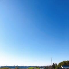 いちご狩り/いちご一会/いちごの里/朝日新聞/ダウン症写真展/卵サンド/...      雲一つない青空  凄い久しぶり…