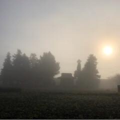 菊の花/霧/風景 今日の朝は霧 神秘的な風景に思わずシャッ…(2枚目)