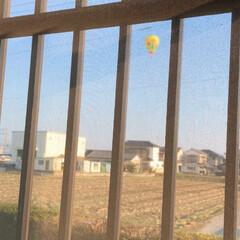 てんとう虫/着陸!/気球/風景/小さい春 おはようございます😃  今日は朝からラッ…