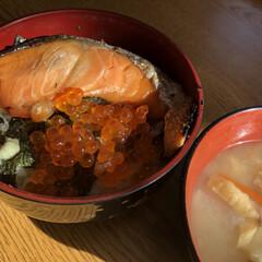 シャケとイクラ/親子丼/昼食/おうちごはんクラブ/おうちごはん/グルメ/... 半日かけて年賀状作り頑張ったので🤗 お昼…