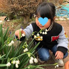 散歩/つくし/水仙/ムスカリ/すずらん/菜の花/... 今日は少し寒い日になりましたね。 それで…