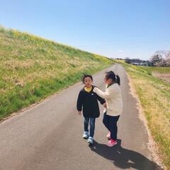 桜/修了式/菜の花/散歩 🌸お花見🌸  いつもの散歩コース🚶♀️…(2枚目)