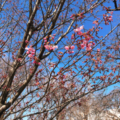 コロナに負けるな/ガンバレ日本/桜の蕾/大沼公園/お弁当のおかず&便利グッズ/お弁当 今日は、次女の支援学校に通知表を貰いに行…(3枚目)