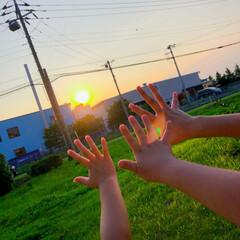 家庭菜園/キュウリ/夕陽/令和の一枚/風景/おでかけワンショット 今日は夏らしい気温になりましたね😆  夏…