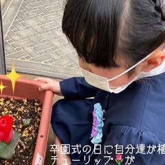 「長女 3月19日 卒業式 三女 3月20…」(4枚目)