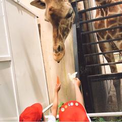 宇都宮動物園/遠足/お弁当/おでかけ/おでかけワンショット 遠足🚌💨班  私と三女で幼稚園の遠足 お…(5枚目)