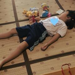 うとうと/昼寝/運動会の練習 幼稚園から帰って来て、ぬいぐるみと遊んで…