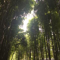 夏休み/京都/おでかけ 夏の嵐山の風景です。  写真で見ると涼し…