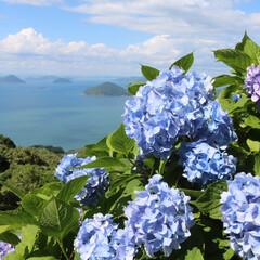 おでかけワンショット/令和の一枚/フォロー大歓迎/おでかけ/旅行/風景 香川県三豊市紫雲出山 綺麗な海と紫陽花