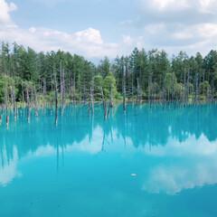 北海道観光/北海道/おでかけ/旅行/風景 北海道へ行きました。  美瑛の青い池まで…