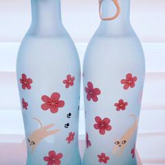 京都/猫好きにはたまらない/猫/にゃんこ同好会/グルメ/フード 京都伏見の招德酒造さんから季節限定の猫と…