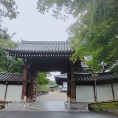 ヨガマット/ヨガ/雨季ウキフォト投稿キャンペーン/おすすめアイテム/至福のひととき/LIMIAおでかけ部/... 東福寺のとあるお寺でヨガレッスンがひっそ…(6枚目)