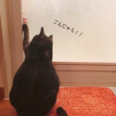猫のいる暮らし/うちの子自慢/ペット/猫 うちのにゃんこの[もも]です。 お姉ちゃ…(1枚目)