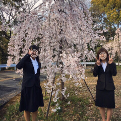 入学式/枝垂れ桜/桜/満開の桜/春の一枚/風景 今日は娘の大学の入学式でした。 満開の枝…