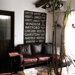ヴィンテージ/イギリスビンテージ/男前インテリア/おうち/インテリア/ドラセナ/... 観葉植物のドラセナコンシンネの葉っぱが、…
