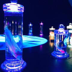 ブルー/標本/透明標本/おでかけ 息子と美術館へ見に行った透明標本展です。…