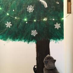 猫とインテリア/猫と暮らすインテリア/猫と暮らす/ロシアンブルー/ディスプレイ/手描きもみの木/... 押し入れの扉に娘が描いたもみの木をクリス…