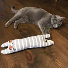 自然素材の家/無垢材の床/ペットグッズ/猫のおもちゃ/ペット/猫/... アークのお気に入りのおもちゃです。  抱…