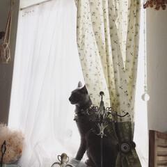 ロシアンブルー/カーテン/リバティ/ハンドメイド/インテリア/DIY この窓のカーテンは、新築当時大好きで収集…