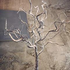 プチプラインテリア/プチプラ/DIY/ディスプレイ/ブランチツリー/ハロウィンツリー/... こちらは枝だけのブランチツリーです。 元…