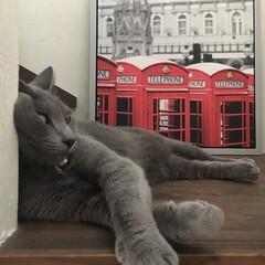 猫とインテリア/IKEA/ロシアンブルー/ペット/猫/インテリア 掃除に必死だったからか、私に相手にしても…
