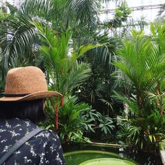 ボタニカル/植物園/ジャングル/五台山/地元のオススメ/牧野植物園/... ずっと薦めてますが、私の中で地元1番のお…(1枚目)