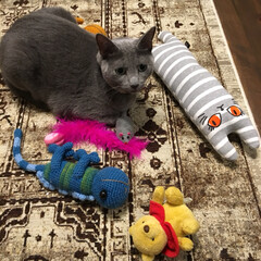 ベルギーラグ/猫グッズ/ペットグッズ/猫のおもちゃ/猫と暮らす/ロシアンブルー/... ぜーんぶ、アークの大好きなおもちゃです。…