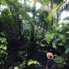 ジブリ/ボタニカル/植物園/ジャングル/牧野植物園/五台山/... 地元のおすすめスポット、「牧野植物園」の…
