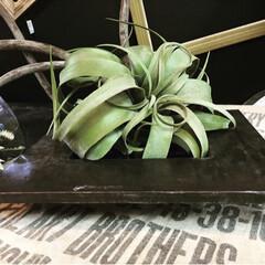 ブリキ鉢/キセログラフィカ/フェイクグリーン/鉢/雑貨 エイジング加工したかっこいいブリキの鉢を…