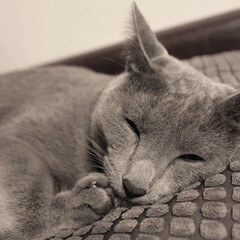LIMIAペット同好会/ペット/猫/にゃんこ同好会/インテリア/イケア/... 気持ちそさそうにスヤスヤ寝ているアークで…
