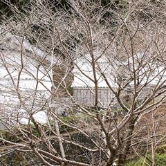 冬景色/温泉/冬/おでかけ/風景 温泉施設の外の景色です。  四季の中で、…