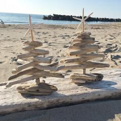 流木ツリー/クリスマスツリー/東京ロハスフェスタ/イベント出店/流木雑貨/流木/... 流木とヒトデでクリスマスツリーを作りまし…
