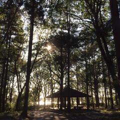 景色/おさんぽ/おでかけ/フォロー大歓迎 秋晴れの日、数年ぶりに行った地元の公園。…