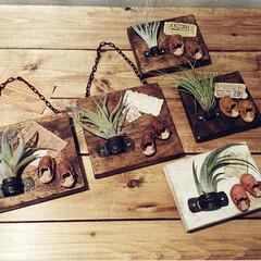 エアプランツ/インテリア/雑貨/ハンドメイド/革小物/ミニチュア雑貨 過去のハンドメイド作品。 木製プレートに…