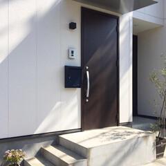 玄関アプローチ/観葉植物のある暮らし/観葉植物/インテリア/住まい/小さい春 玄関先に置いているグリーン。 「金のなる…(2枚目)