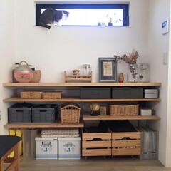 見せる収納/オープン収納/猫/DIY/住まい/収納 オープン収納棚  新築の際 予算削減のた…