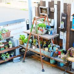 多肉植物/リメイク缶/男前インテリア/ガーデニング/100均/DIY 我が家のジャンクガーデン。 板壁もウッド…