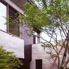 庭/植栽/植木/ガーデニング/四季/もみじ/... もみじの家の中庭にはシンボルツリーである…