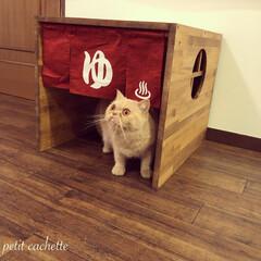 トイレカバー/猫のトイレ/おうち/ペット/猫/にゃんこ同好会/... 🐾銭湯風猫ちゃんトイレ🐾 猫のトイレカバ…