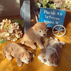 置き物/仔犬のオブジェ/インテリア/ガーデニング雑貨/雑貨/暮らし ♡︎ポカポカ陽気♡︎ 可愛い仔犬のオブジ…