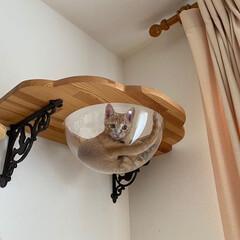 インテリア/猫と暮らす/DIY/キャットウォーク/キャットステップ/おしゃれ ♡︎キャットステップ♡︎ アイデアにもu…(2枚目)