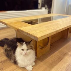 アイデア家具/インテリア/ローテーブル/猫カフェ/猫家具/暮らし/... ♡︎猫ちゃんが見えちゃうローテーブル♡︎…