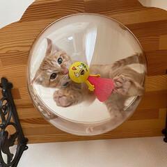 インテリア/猫と暮らす/DIY/キャットウォーク/キャットステップ/おしゃれ ♡︎キャットステップ♡︎ アイデアにもu…(1枚目)