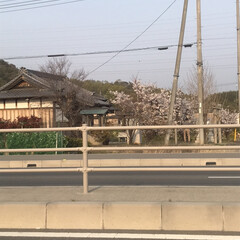 帰り道/桜/風景 仕事からね帰り道に 懐かしい気分にさせる…