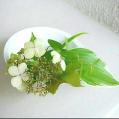 白/紫陽花/生花/アレンジ 額紫陽花と野草を小さい小皿に生けました