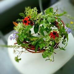 夏の花/リース/アレンジ/生花 水を張ったガラスの器にアカヅルのリースを…