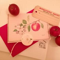 表参道/姫りんご/りんごのカード/フランスのビスケットのタグ/雑貨/おでかけ 器屋さんなんですが、奥の方におや💡と、見…